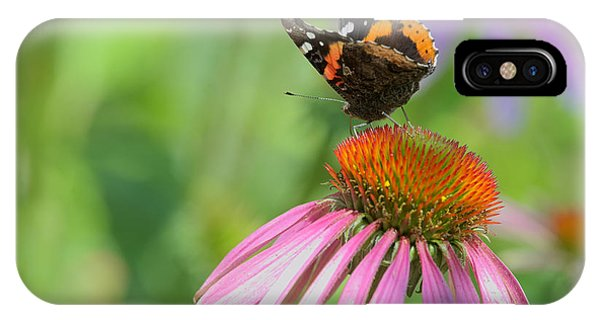 Red Admiral On Cone Flower IPhone Case