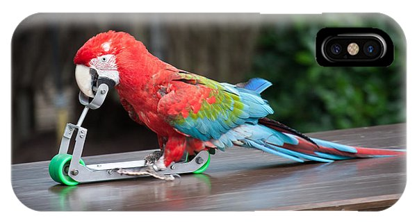 Red-and-green Macaw IPhone Case