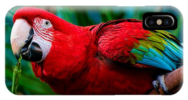 Red And Green Macaw IPhone Case