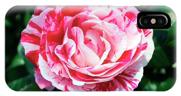 Red And Pink Floral Candy Rose Garden 490 IPhone Case