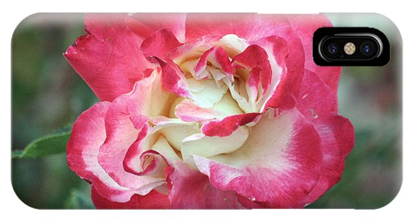 Red And White Rose IPhone Case