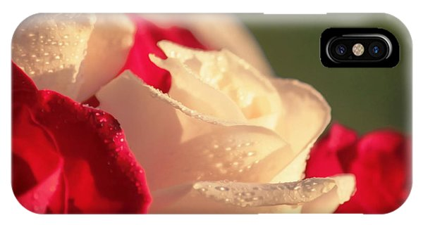 Red And White Roses IPhone Case