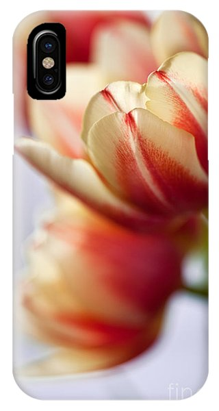Tulip iPhone Case - Red And White Tulips by Nailia Schwarz
