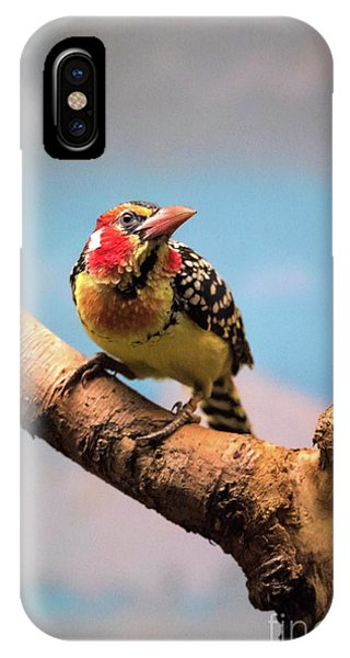 Red And Yellow Barbet IPhone Case