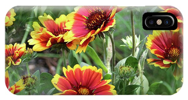 Red And Yellow Daisy Dreams IPhone Case