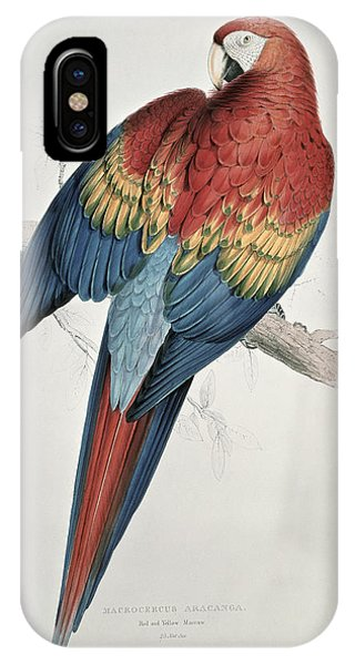 Macaw iPhone Case - Red And Yellow Macaw  by Edward Lear