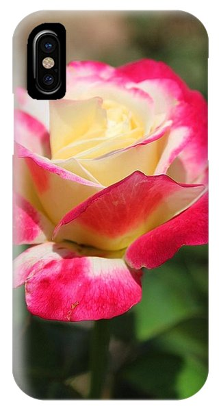 Red And Yellow Rose IPhone Case