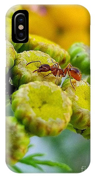 Red Ant IPhone Case