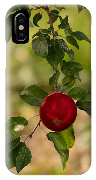 Red Apple Ready For Picking IPhone Case