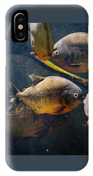 Red Bellied Hungry Piranha IPhone Case