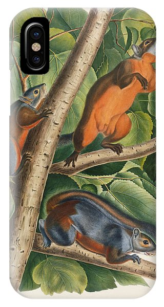 Red Bellied Squirrel  IPhone Case