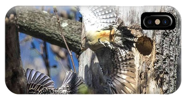 Red Bellied Woodpecker Chasing An Attacking Starling IPhone Case