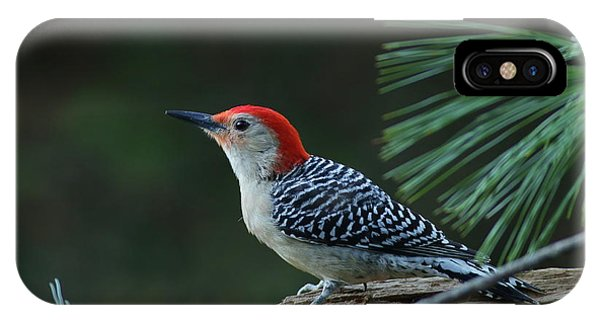 Red-bellied Woodpecker In The Pines IPhone Case