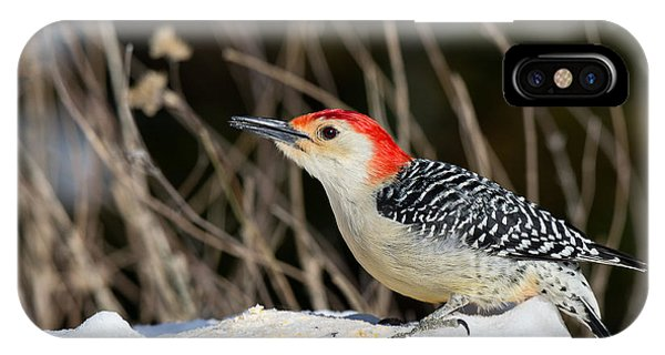 IPhone Case featuring the photograph Red-bellied Woodpecker In The Snow by Angel Cher