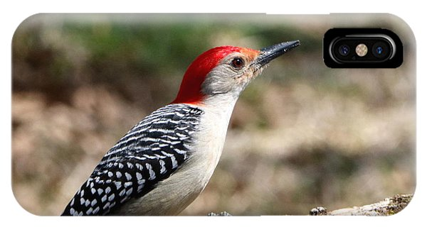 Red-bellied Woodpecker IPhone Case