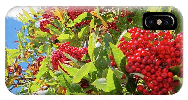 Red Berries, Blue Skies IPhone Case