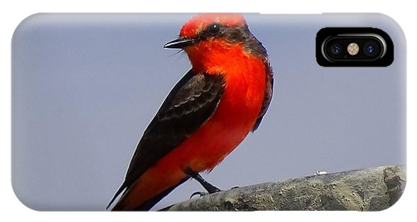 IPhone Case featuring the photograph Red Bird by Cindy Charles Ouellette