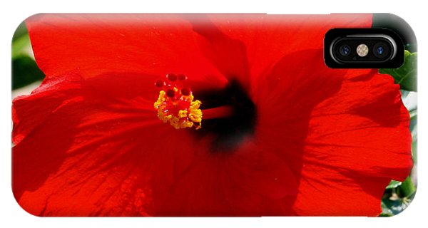 Red Bloomers Phone Case by Paul Anderson