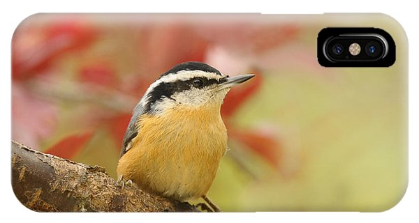 Red Breasted Nuthatch  IPhone Case
