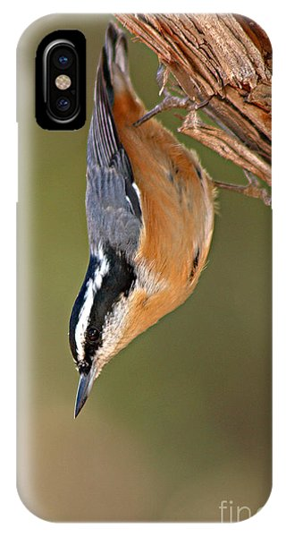 Red-breasted Nuthatch Upside Down IPhone Case