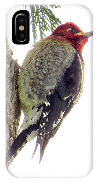 Red-breasted Sapsucker IPhone Case