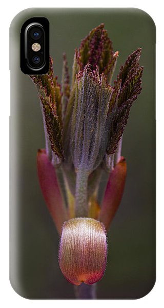 Red Buckeye Leaves Emerging IPhone Case