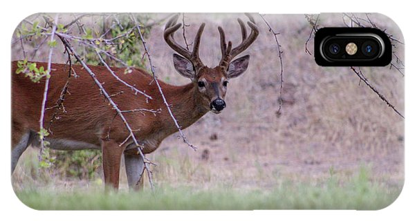 IPhone Case featuring the photograph Red Bucks 2 by Antonio Romero