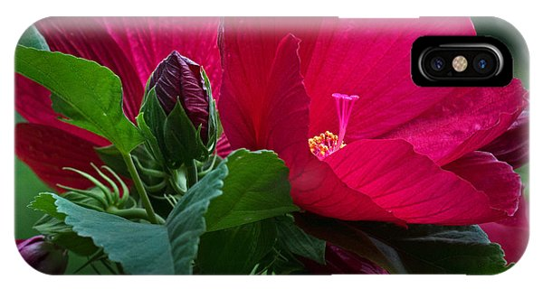 Red By The Pond IPhone Case