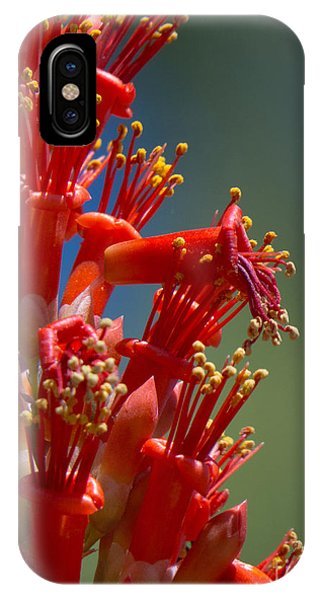 Red Cactus Flower 1 IPhone Case