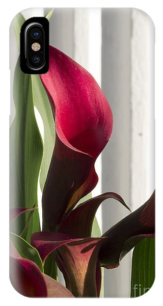 Red Cala Lilies IPhone Case