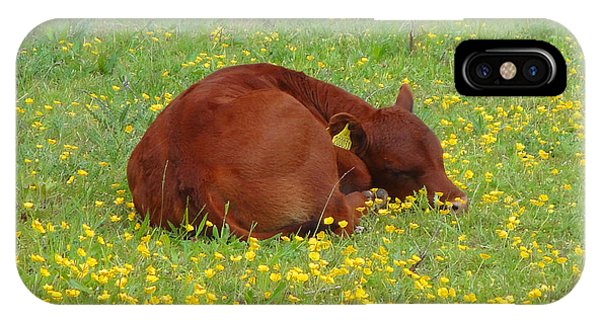 Red Calf In The Buttercup Meadow IPhone Case