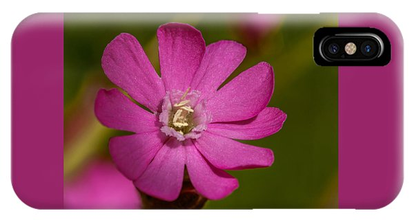 Red Campion IPhone Case