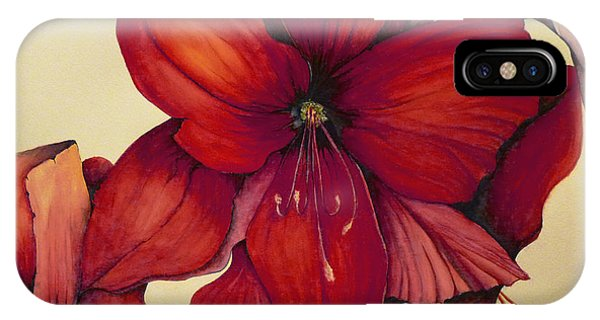 Red Christmas Amaryllis IPhone Case