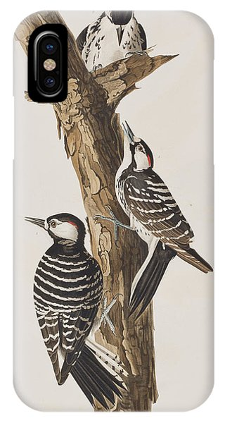 Red-cockaded Woodpecker IPhone Case