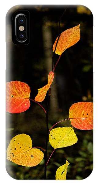 IPhone Case featuring the photograph Red Cottonwood Leaves by Fred Denner