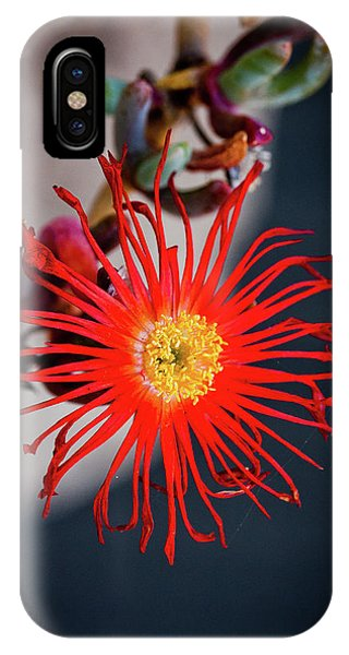 Red Crab Flower IPhone Case