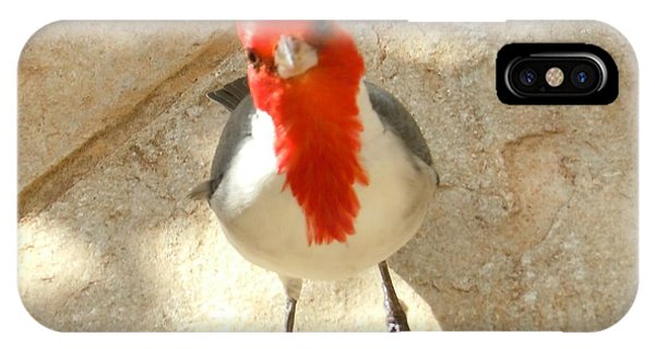 Red-crested Cardinal At My Feet IPhone Case