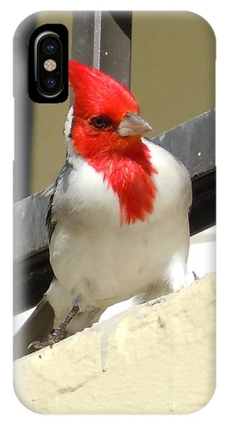 Red-crested Cardinal Posing On The Balcony IPhone Case