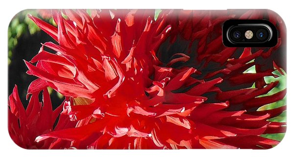Red Dahlia Pizazz  IPhone Case