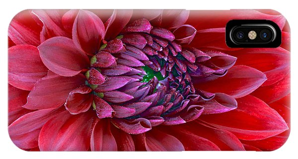 Red Dalia Up Close IPhone Case