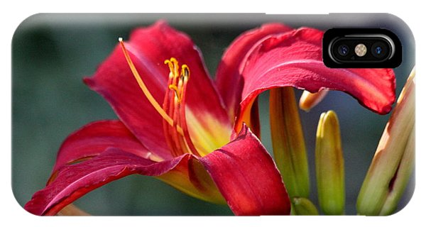 Red Day Lily  IPhone Case