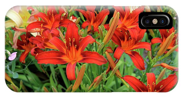 Red Daylilies IPhone Case