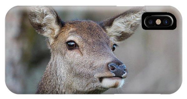 IPhone Case featuring the photograph Red Deer Hind - Scottish Highlands by Karen Van Der Zijden