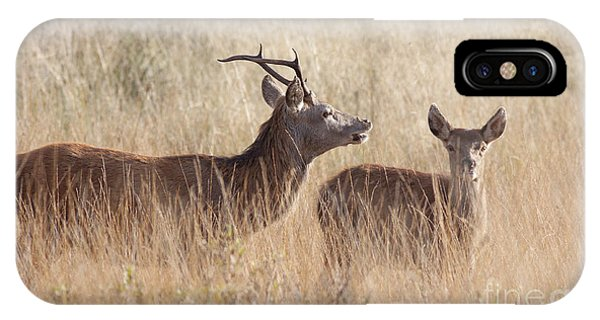 Red Deer Stag And Hind IPhone Case