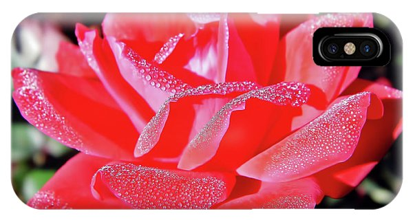Red - Dew Covered  - Rose IPhone Case