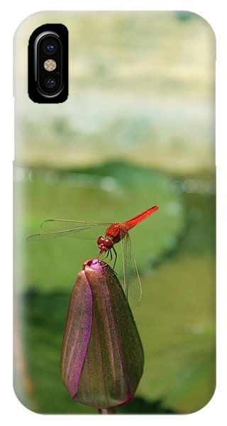 Red Dragonfly At Lady Buddha IPhone Case