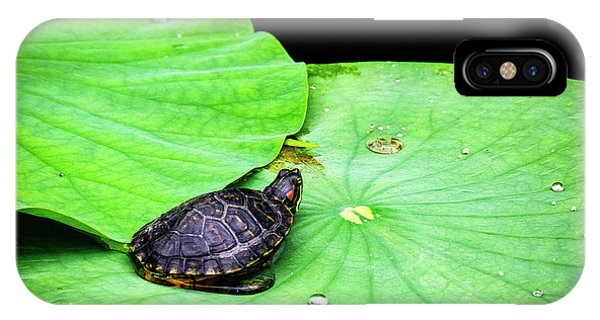 Red-eared Slider IPhone Case