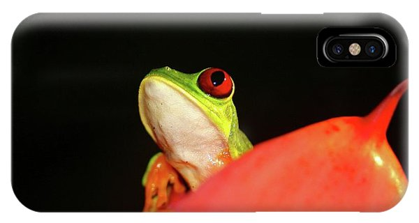 Red-eyed Tree-frog IPhone Case