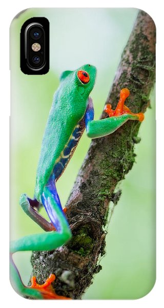red eyed tree frog Costa Rica IPhone Case