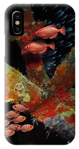 Red Fish On The Rhone IPhone Case